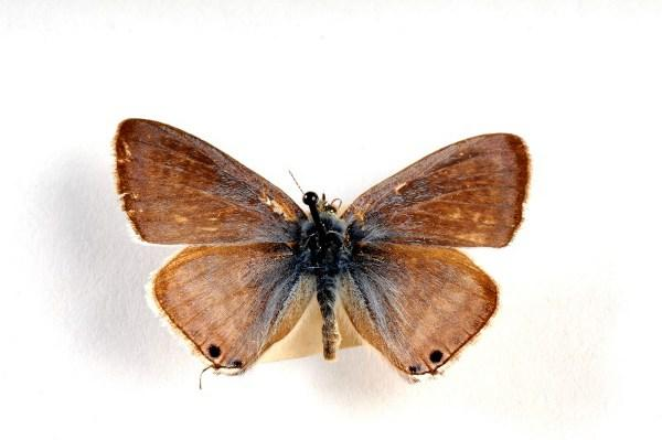 Rare butterfly from the RM collection.