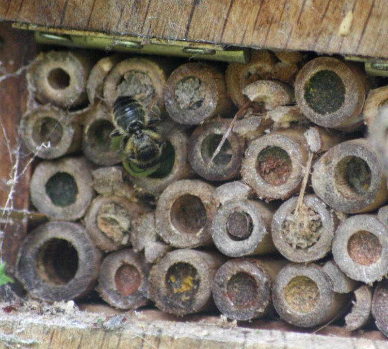 Image of a bee house.