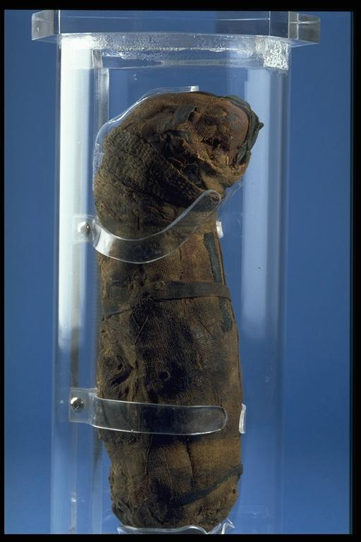 ancient Egyptian mummified cat