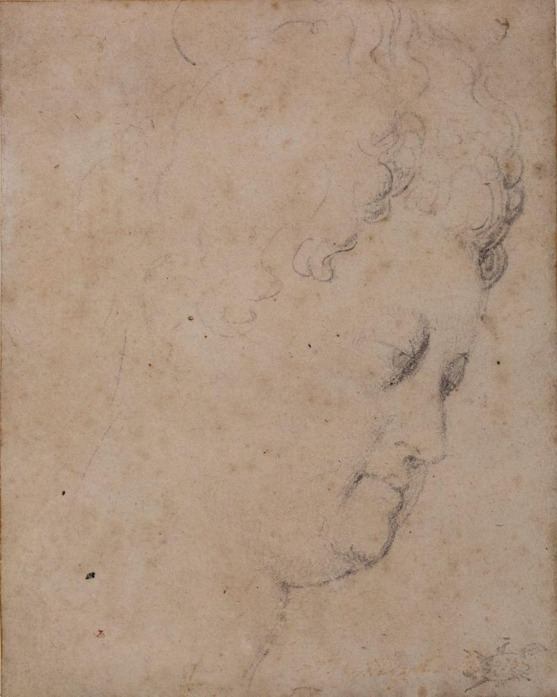 A drawing by Rubens.