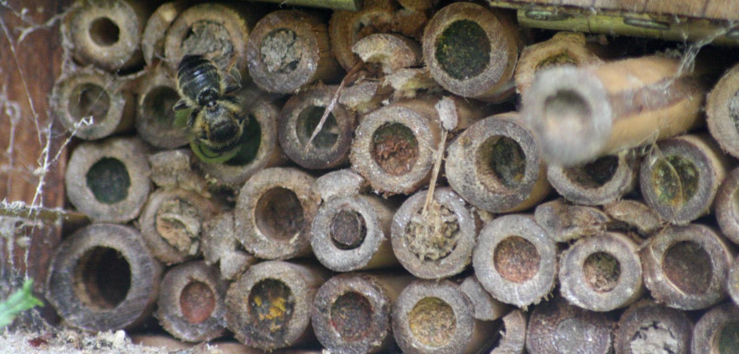 Hero image showing bee houses.