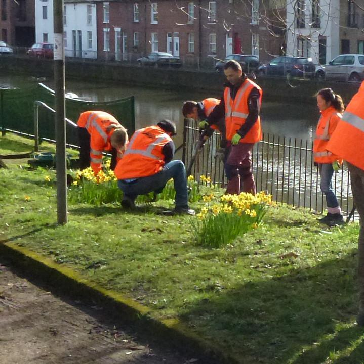 Snowdrop planting on Chestnut Walk, Reading