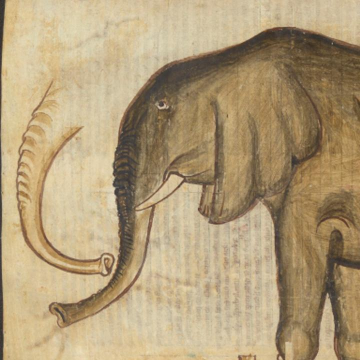 Elephant from Matthew Paris manuscript